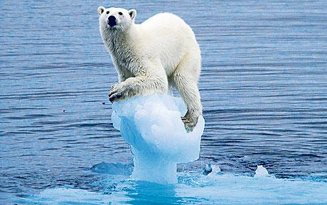 Polar bear on ice cube