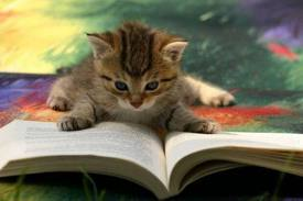 kitten reading book
